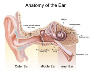 Treating ear infection with chiropractic grimes las vegas a diagram of the human ear with labels ccuart Image collections